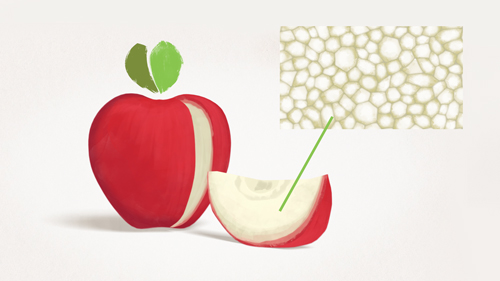 ApfelCholest und Apfelpektin