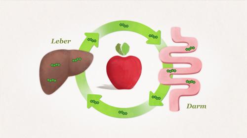 ApfelCholest und Cholesterin